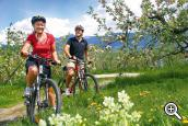 Bike tours through the fruit orchards of the Merano region